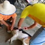 เทศบาลตำบลแม่อายออกพื้นที่ให้บริการฉีดวัคซีนป้องกันโรคพิษสุนัขบ้า ประจำปี ๒๕๖๓